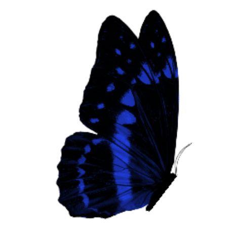 Spark AR: Butterfly Block