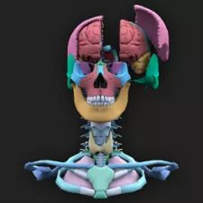 The Brain Holograph