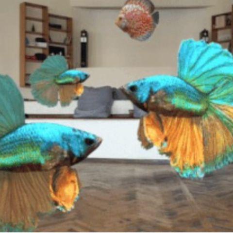 An aquarium in your room?