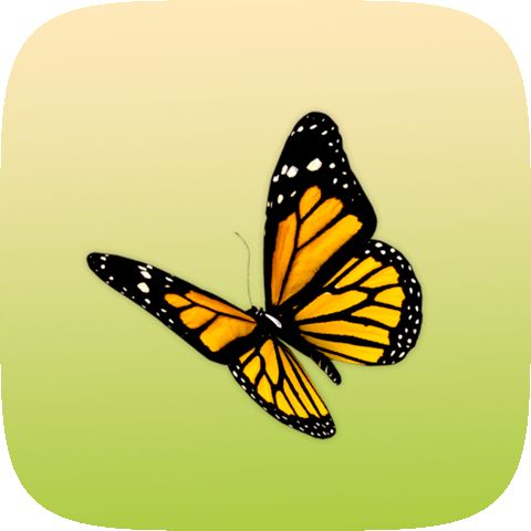 Butterfly Instagram lens