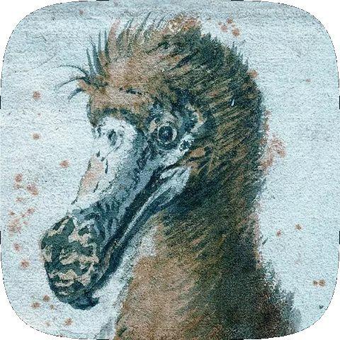 Dodo Sketch AR Instagram Filter