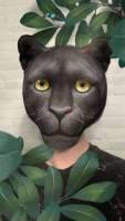 Leopard x Panther - Spark AR