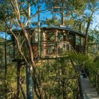 Tree House - Fectar